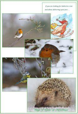 Wildlife Christmas Cards.10 Xmas Mix Wildlife Christmas Cards