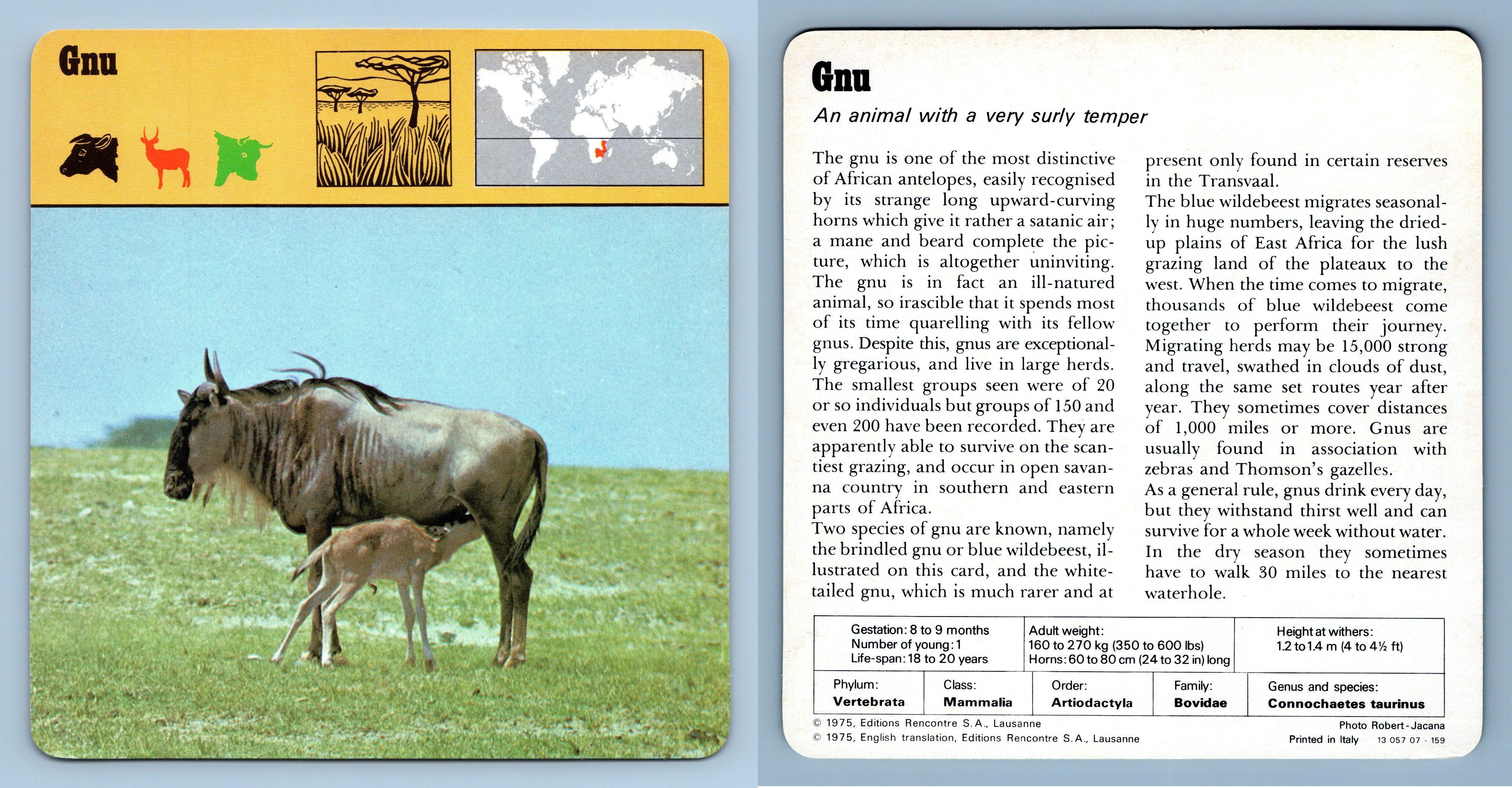 1970/'s Recontre Safari Wildlife Card Mammals Cat