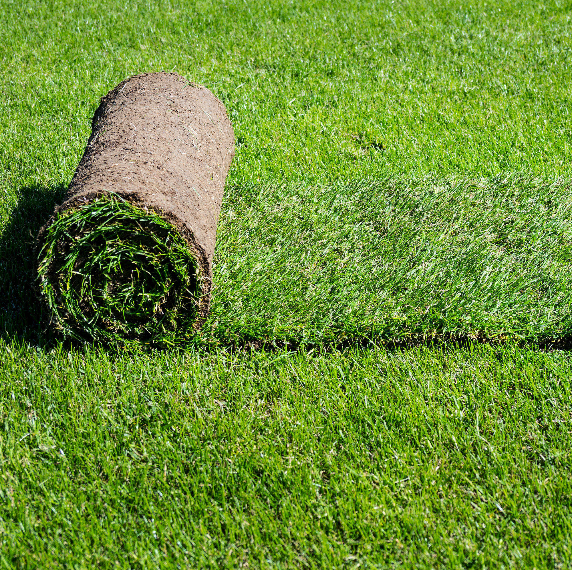 Locally grown, netting free Turf from Dorset on