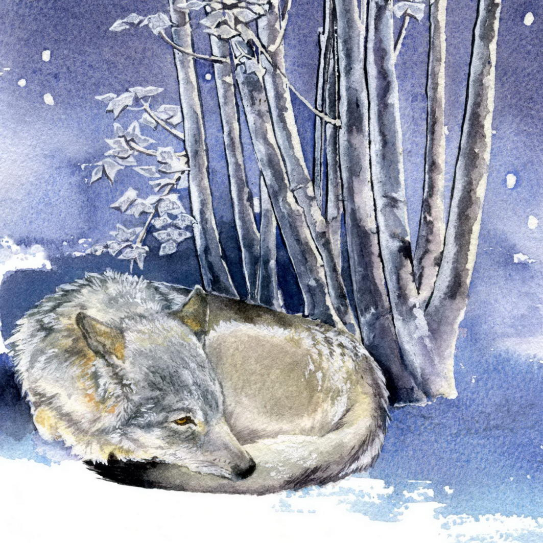 MW Eurasian Wolf Christmas Cards 125mm squ