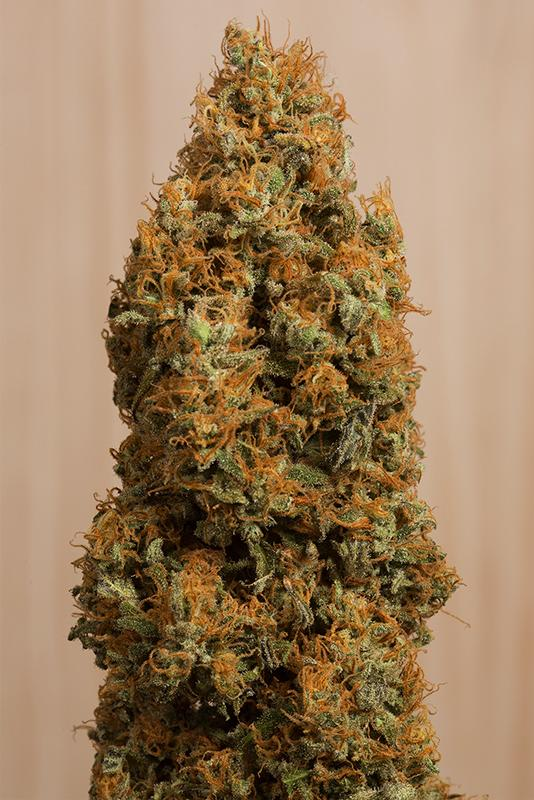 Green Crack CBD Feminised Seeds | Humboldt Seeds | Cannabis