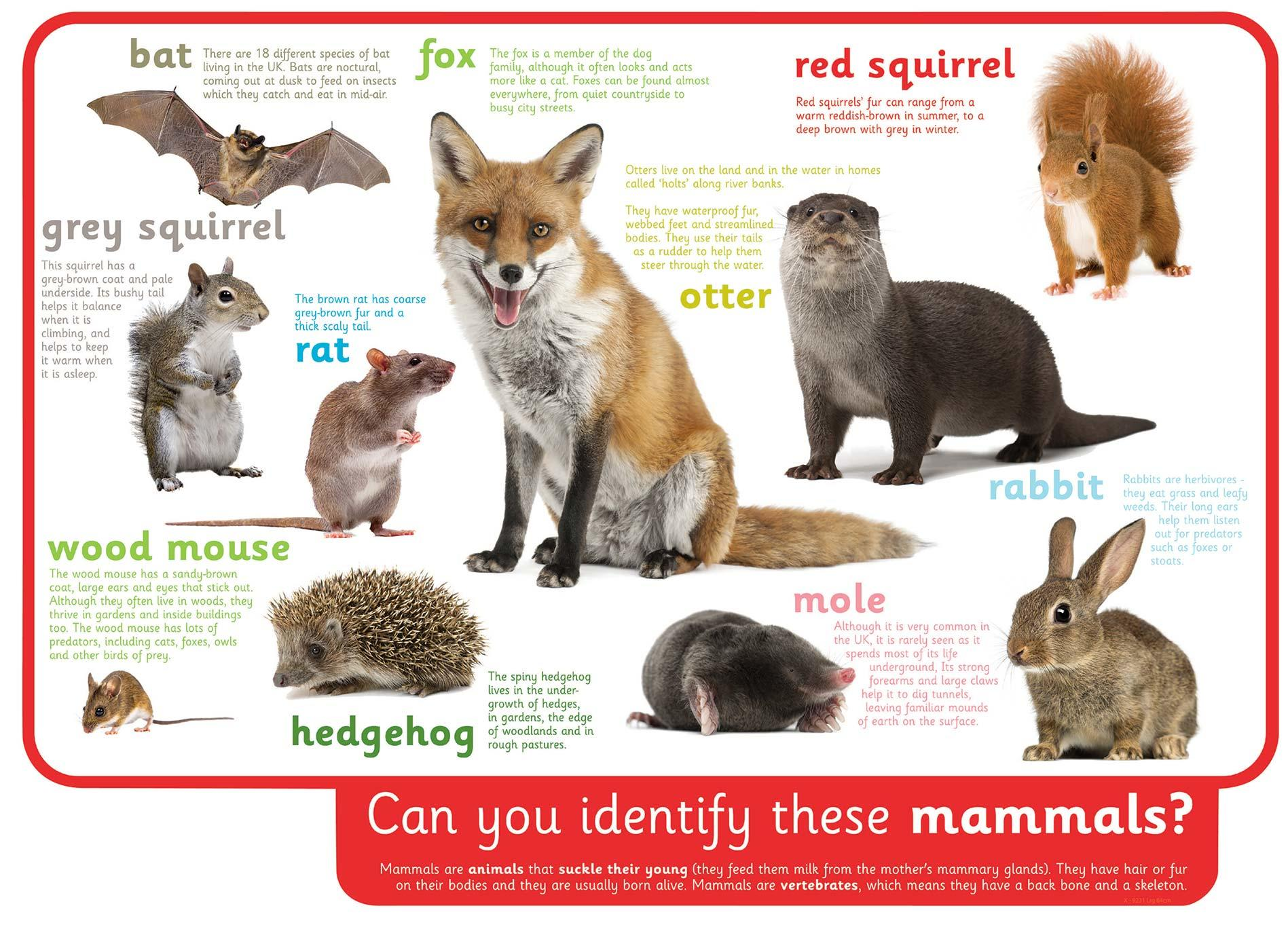 Can You Identify These Mammals
