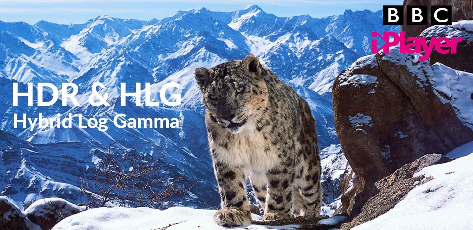 What is HLG Hybrid Log Gamma?