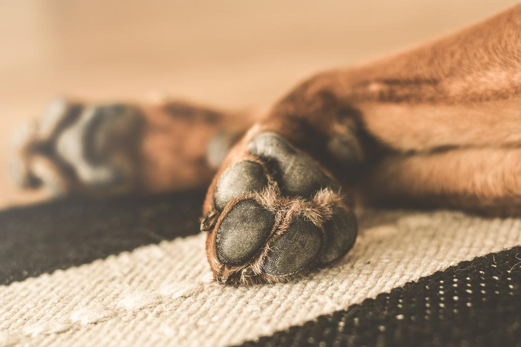 Muddy Paws and Why They Matter:  Protecting your Dog from Alabama Rot