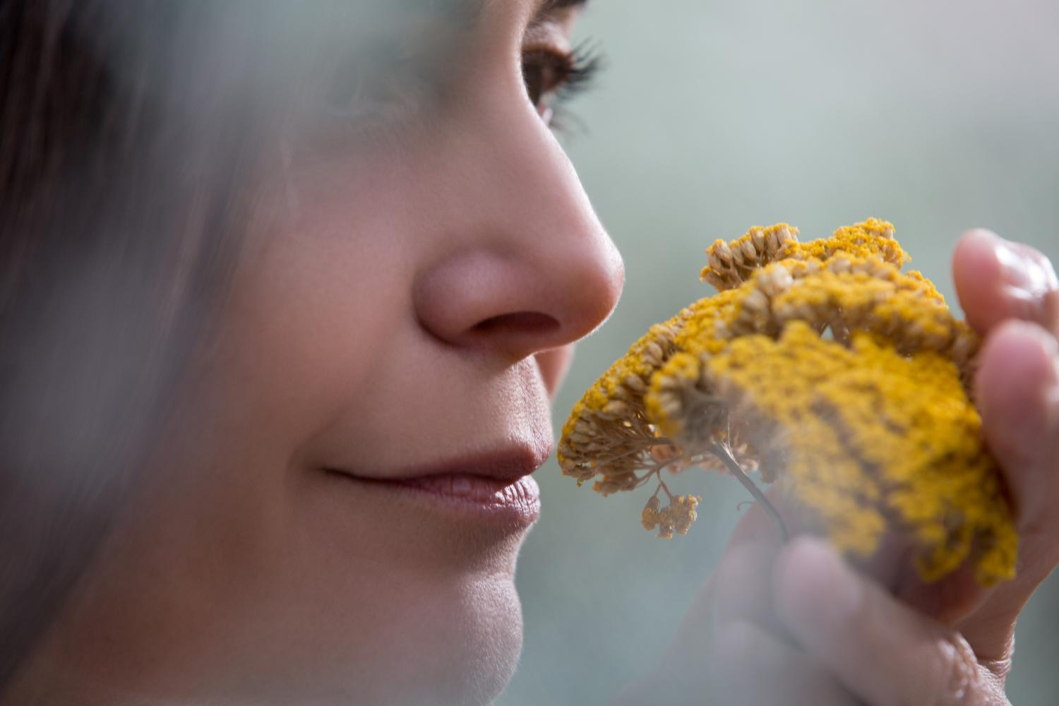Exploring the seven key olfactory families and the ingredients that determine them.