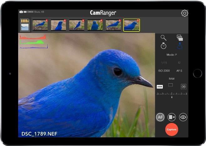 ipad-bird.jpg