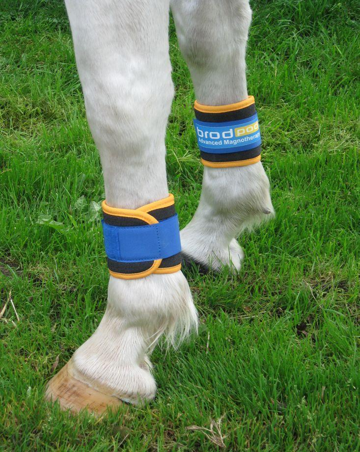 Magnetic leg wraps for horses