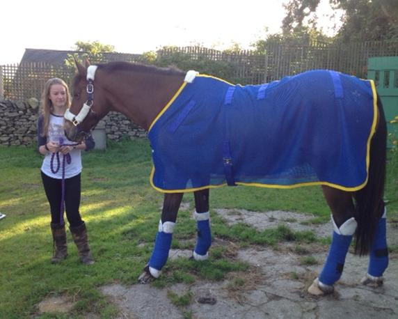 Best magnetic horse rug