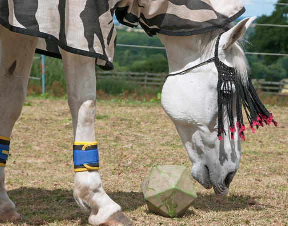 Alternative Pain Relief for Horses