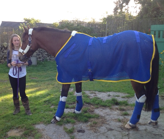 Brodpod Magnetic Therapy Rug For Horses