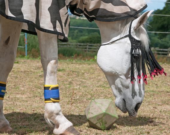 Magnetic therapy boots for horses
