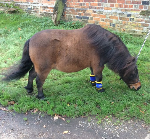 Magnetic leg wraps for shetlands
