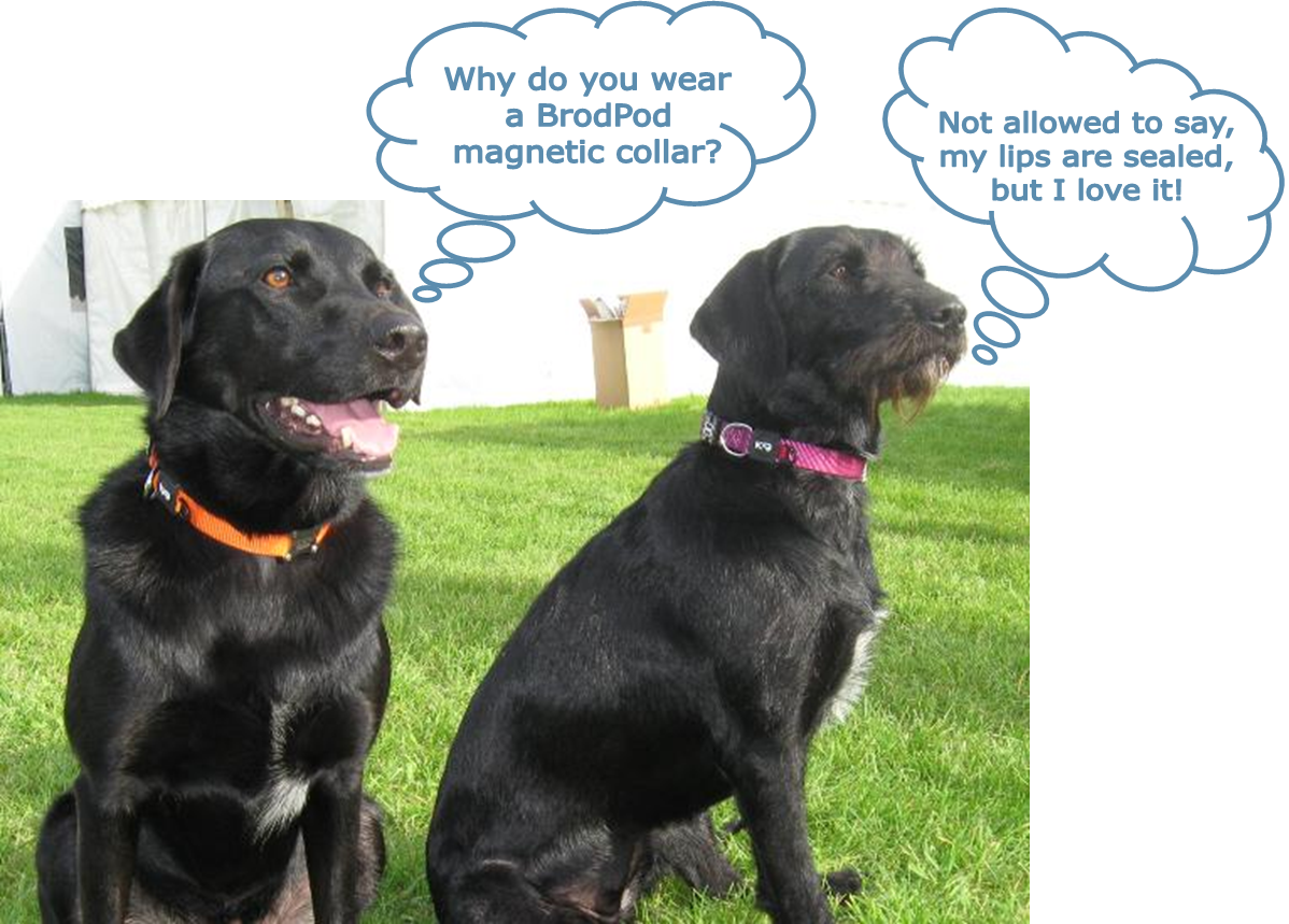 The best magnetic dog collars