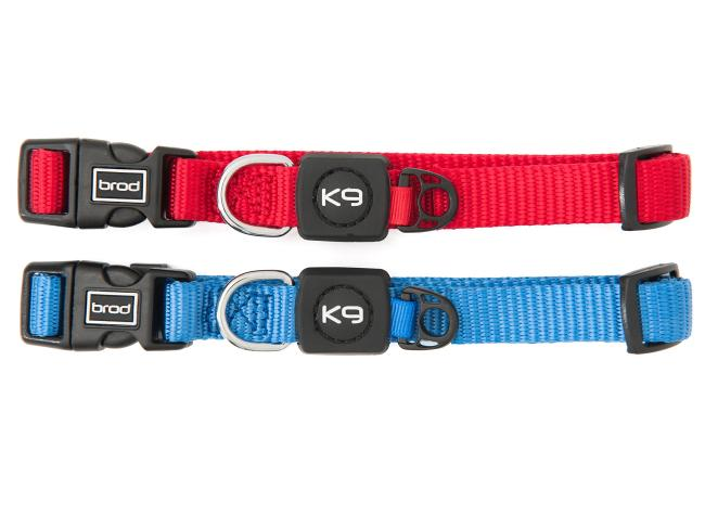 Colour choice for small dog collars