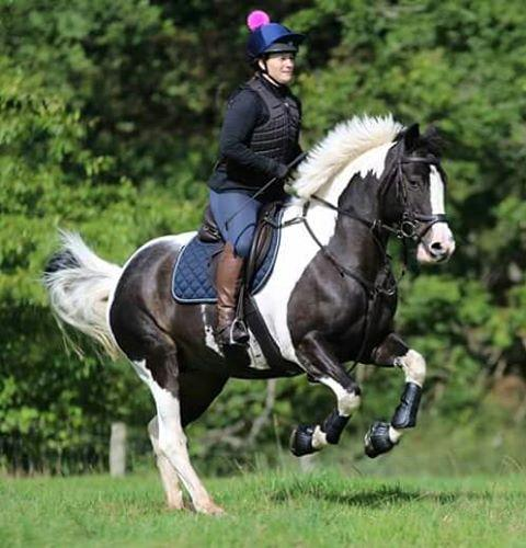 Magnetic leg wraps for horses