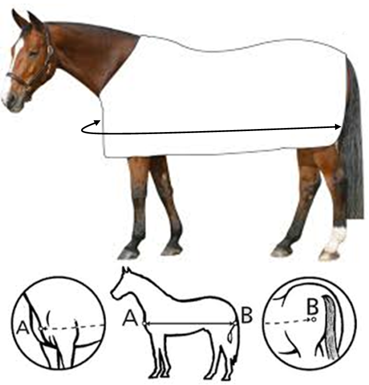 Magnetic Horse rug measuring