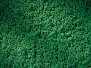 Auhagen 76670 Dark Green Turf