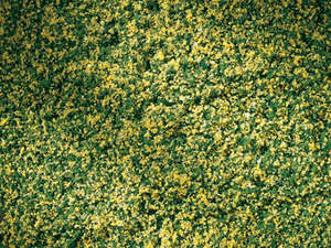 Auhagen 76668 Rolled lawn with spring flowers