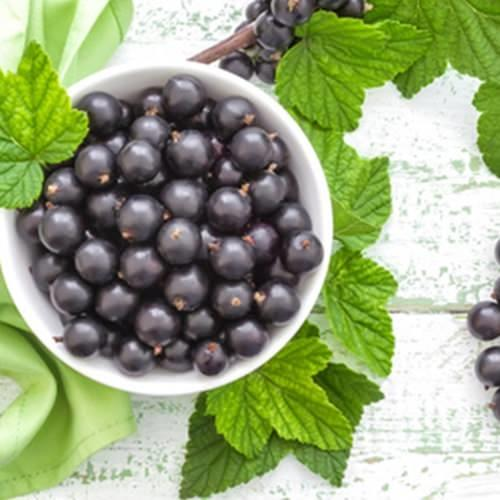The Flavour Apprentice Blackcurrant Concentrate