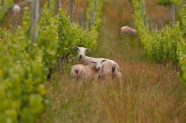 Organic v Sustainable v Biodynamic