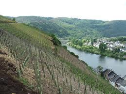 All about German Wines - A guide to the unfathomable