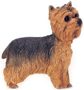Dog Studies Walkies Collection Yorkshire Terrier Standing