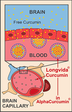 alphacurcumin-blood-brain-diagram-250.png