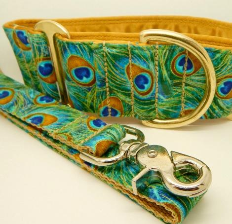 peacock dog collar, greyhound, whippet, turquoise