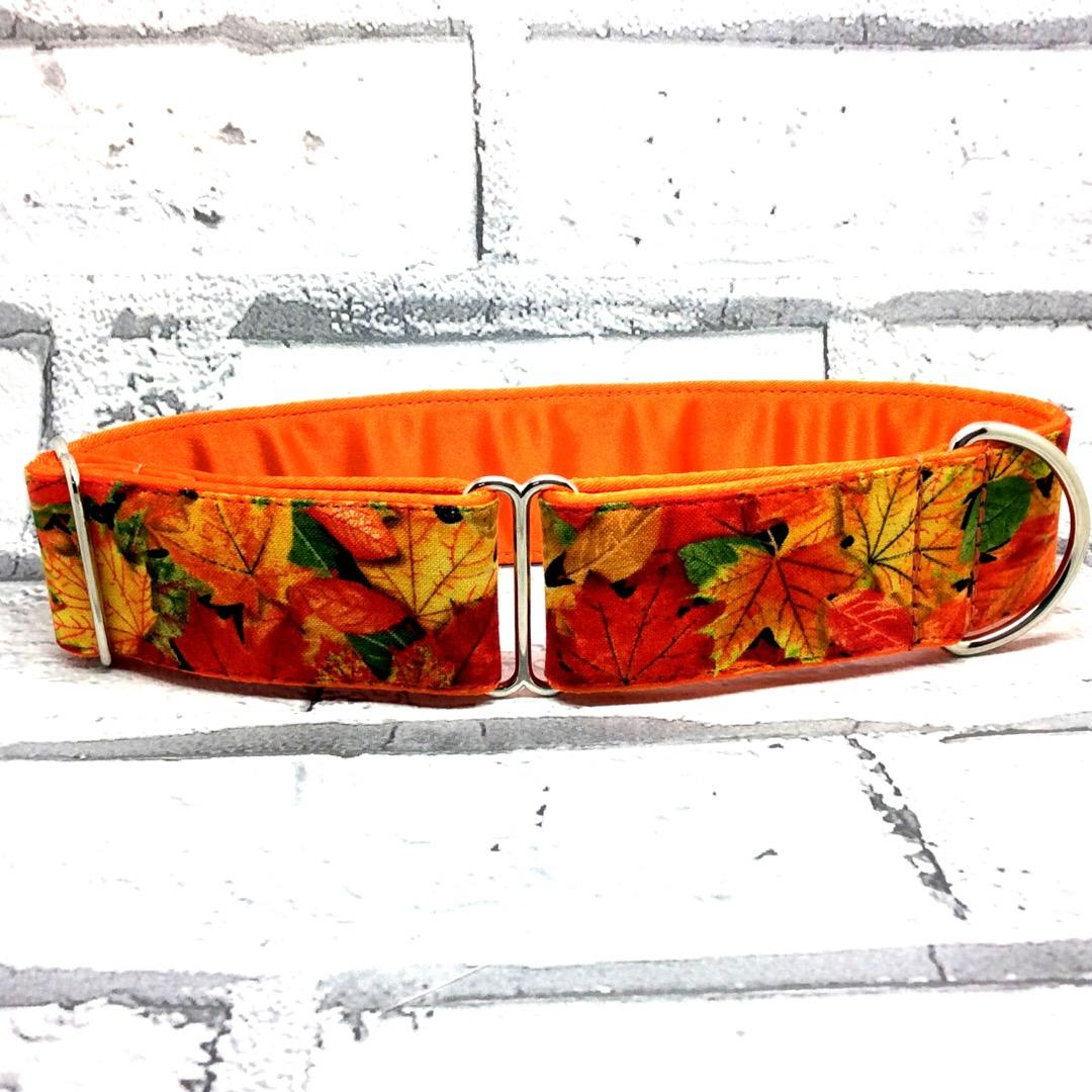 Autumn leaves, gold, orange, yellow dog collar