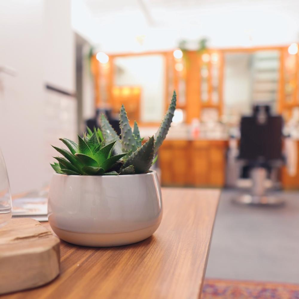 The prickly Aloe Vera featured in the MÜHLE London Treatment Space
