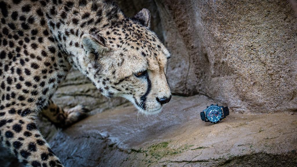 The Big Cat Sanctuary and Omologato