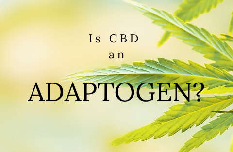 Is CBD An Adaptogen?
