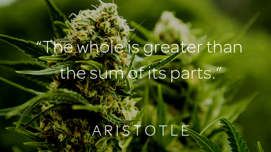 Why Terpenes Matter | Whole Plant CBD oil with Full Terpene
