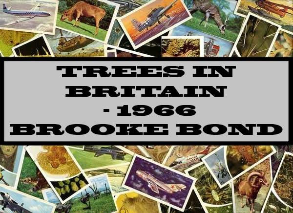 Trees In Britain - 1966 Brooke Bond