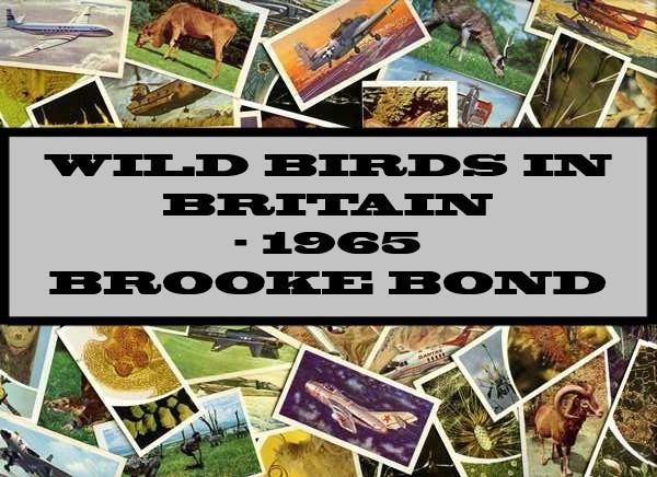 Wild Birds In Britain - 1965 Brooke Bond