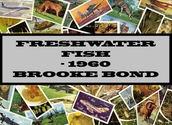 Freshwater Fish - 1960 Brooke Bond