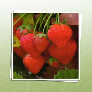 Close Up Of A Strawberry Plant Blank Greeting Card And White Envelope