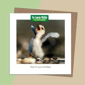 Beautiful Photography Of A Baby Chick Alongside A Funny Tag Line