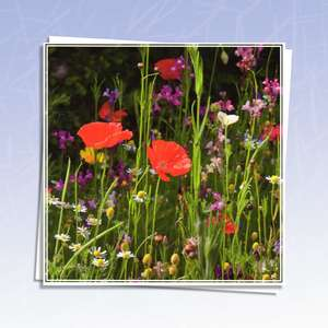 Wild Flower Blank Card Alongside Its White Envelope