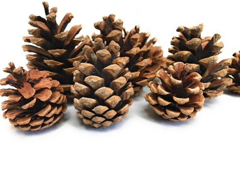 christmas pine cones acorns wreath