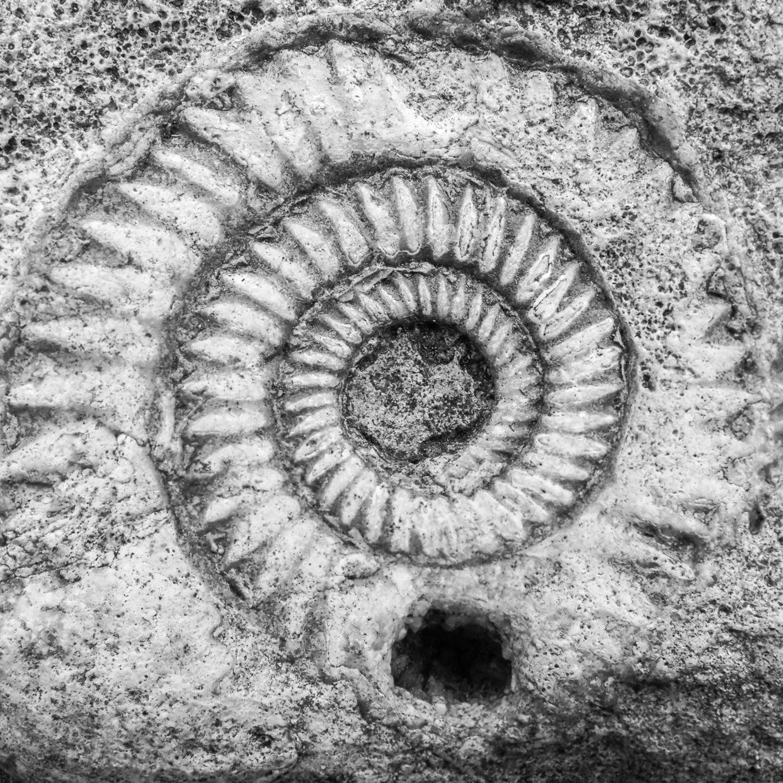 Ammonite - black and white canvas wall art