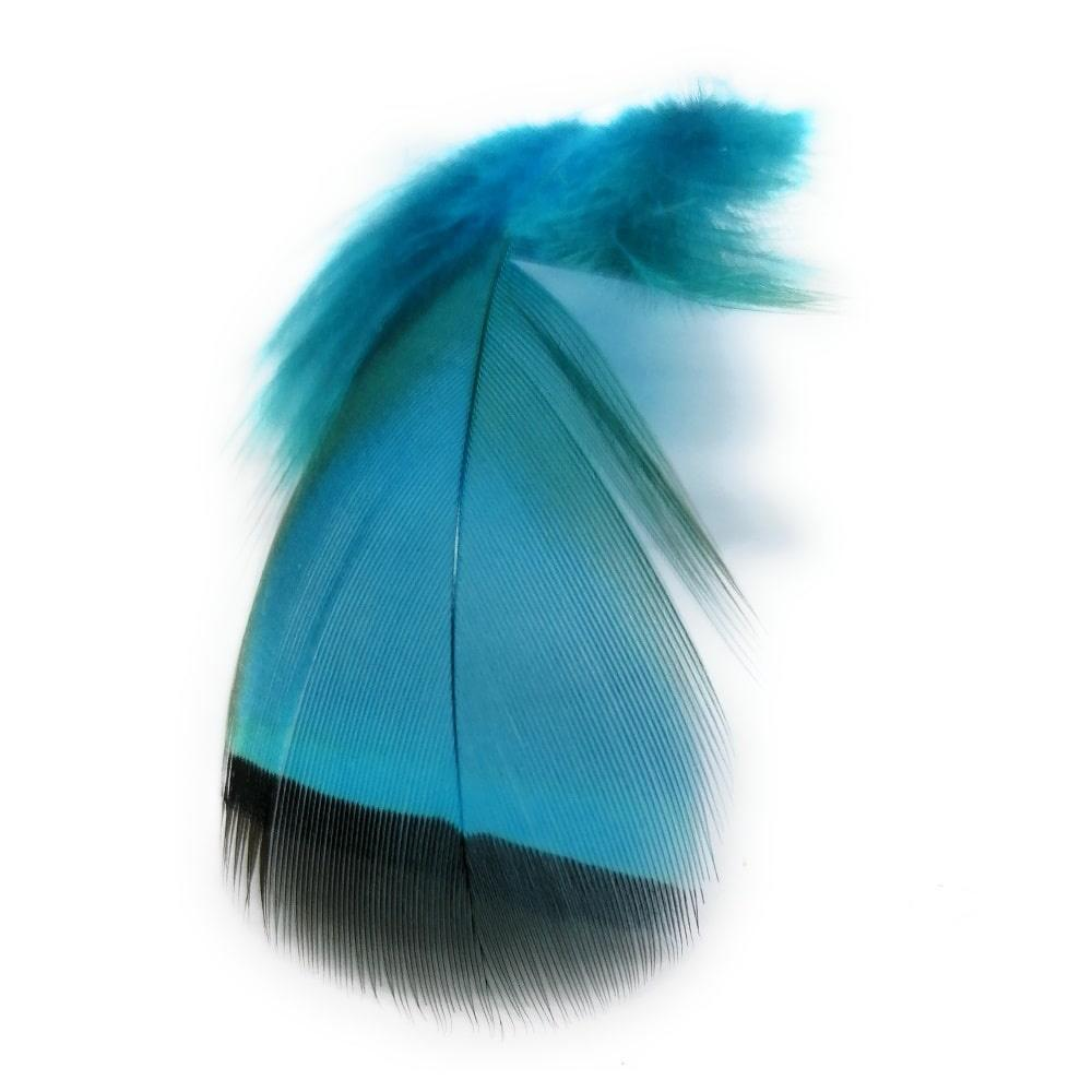 Bronze mallard fly tying feather