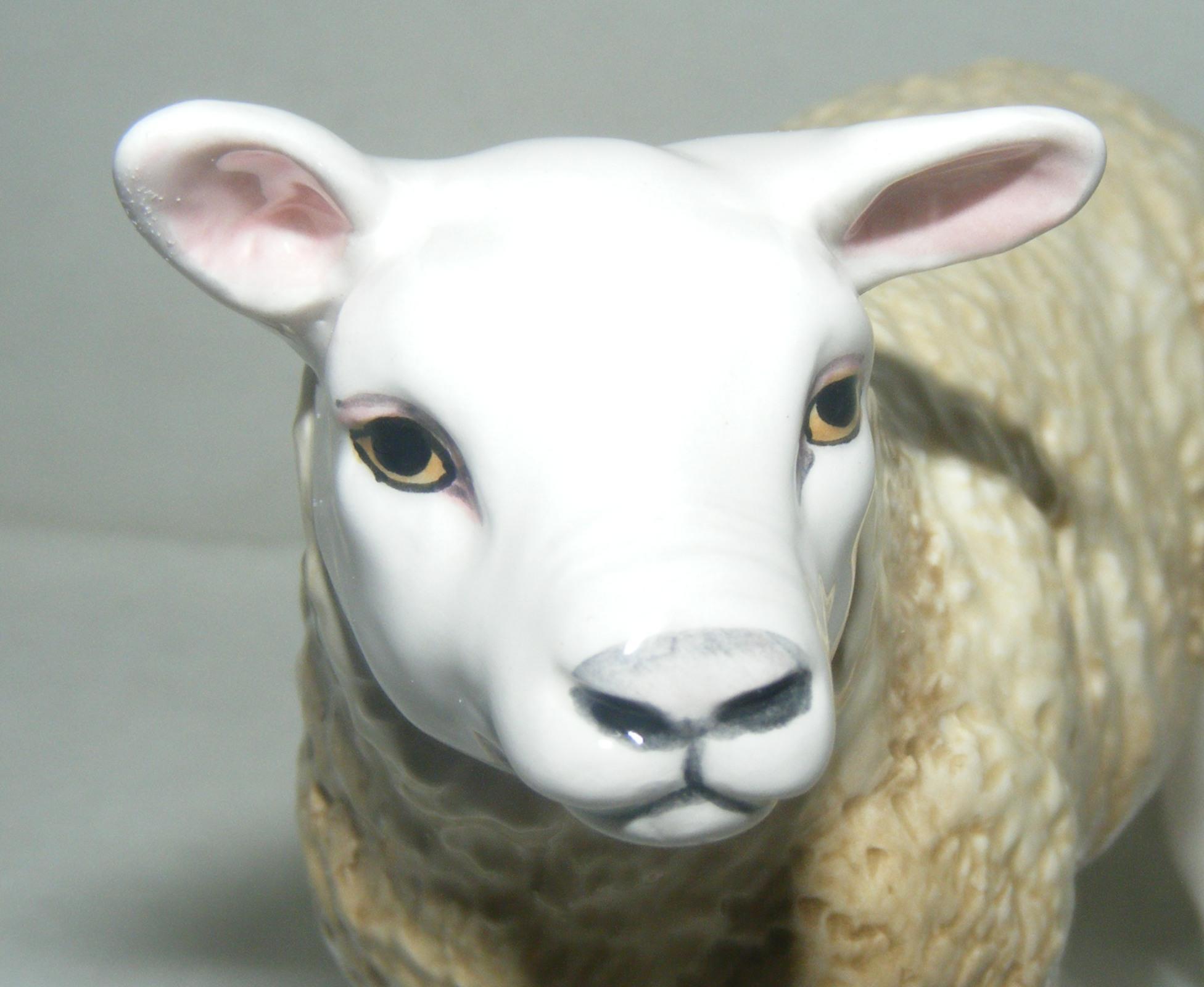 John Beswick Texel Lamb Sheep Farm ...
