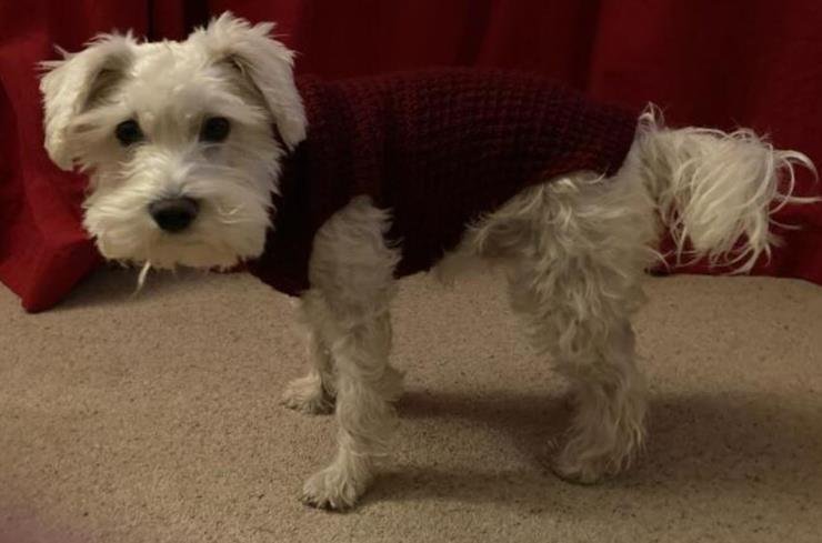 Dog Jacket Knitted<P>in Wine 966