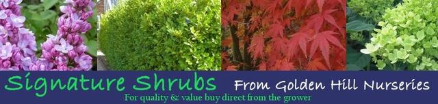 Signature Plants from Golden Hill Nurseries