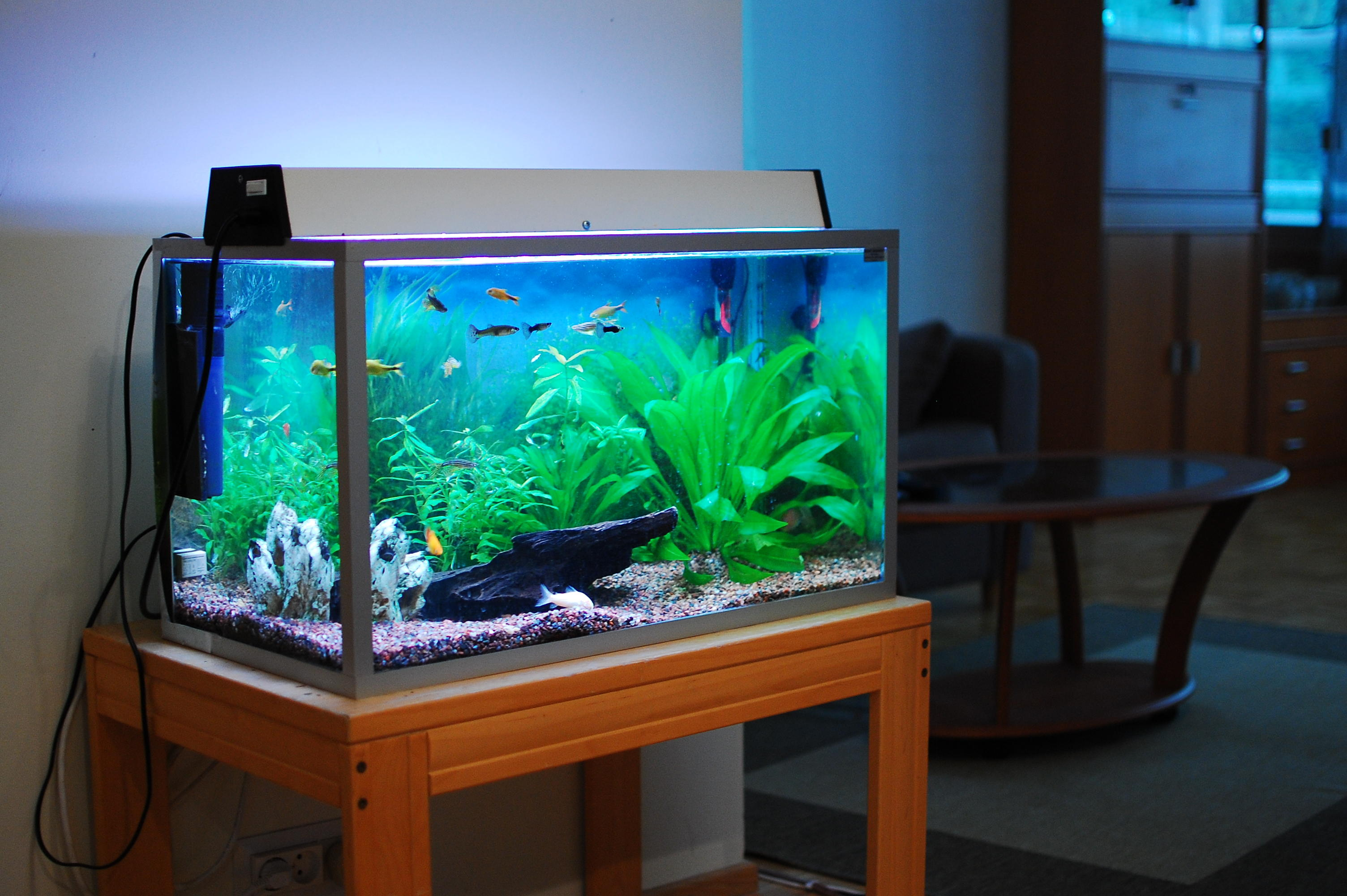 Fish Tanks, Hoods & Stands