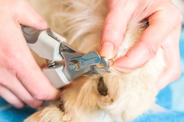 How to Clip Your Dog's Nails at Home (Even if they're black!)