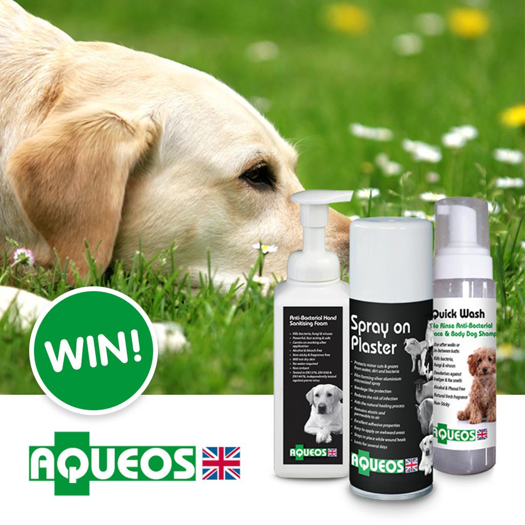 Enter our Fantastic Dog Competition to win £500 worth of goodies