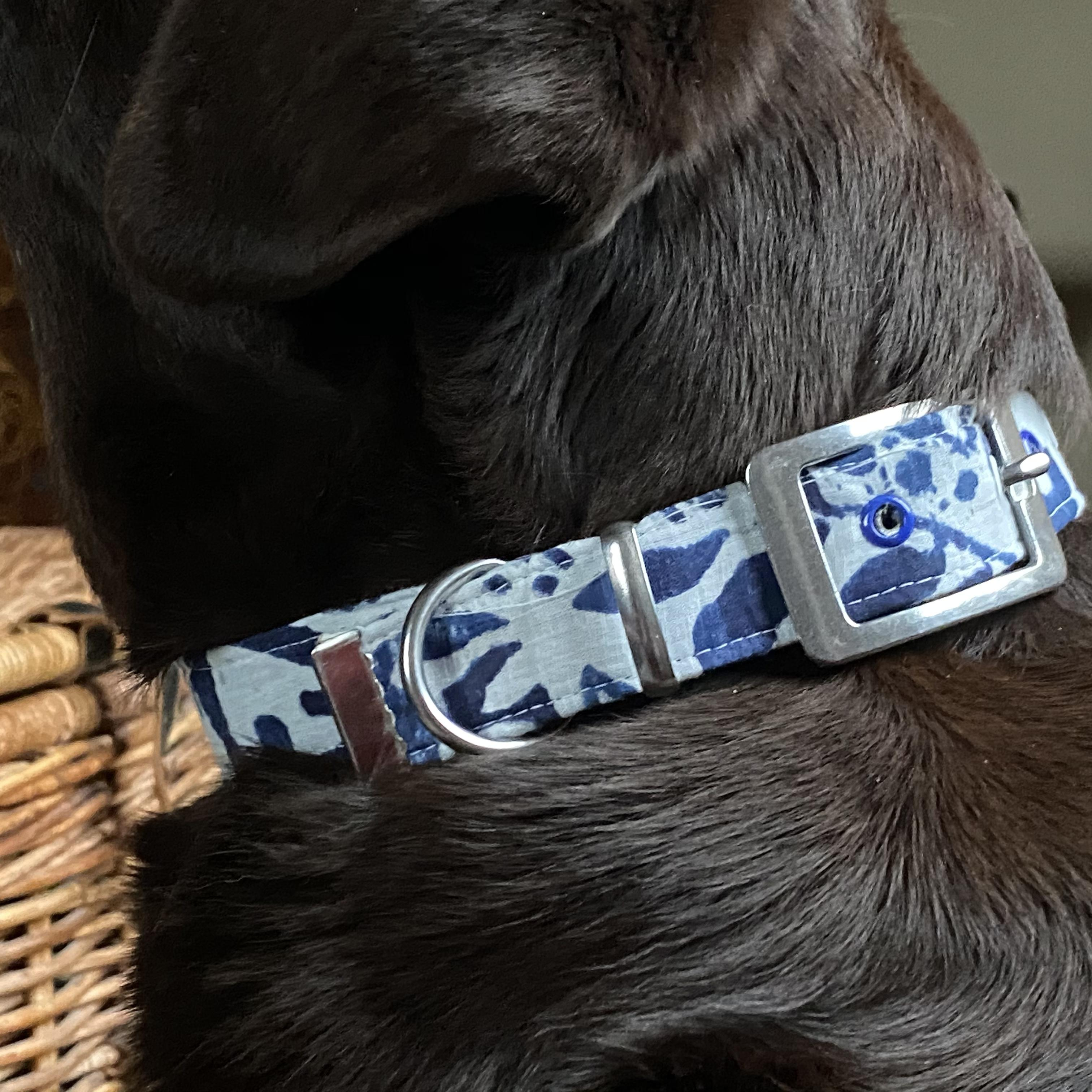 blue and white fabric dog collar on a chocolate labrador