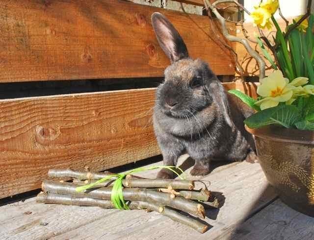 Apple Stick Chews for rabbits & rodents